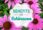 echinaceabenefits