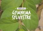 Benefits-of-Gymnema-Sylvestre_20percent_Text