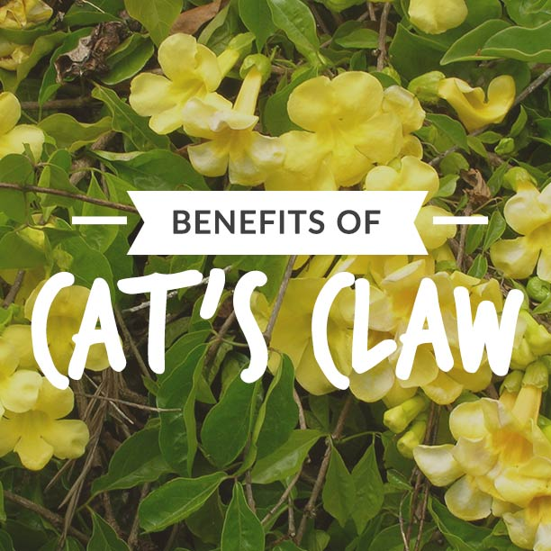 Benefits of cats claw