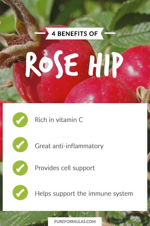 Rose hips vitamin c benefits