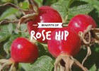 Rose_Hip_Text_20_percent