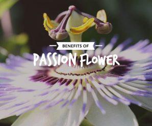 Passion-flower_Image_20percent_Text