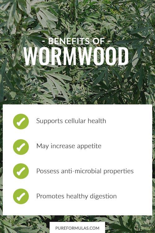 Wormwood orvosi prosztatitis tulajdonságok
